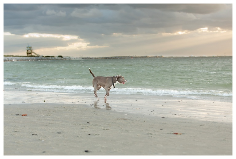 Port Orange Pet Photographer 1