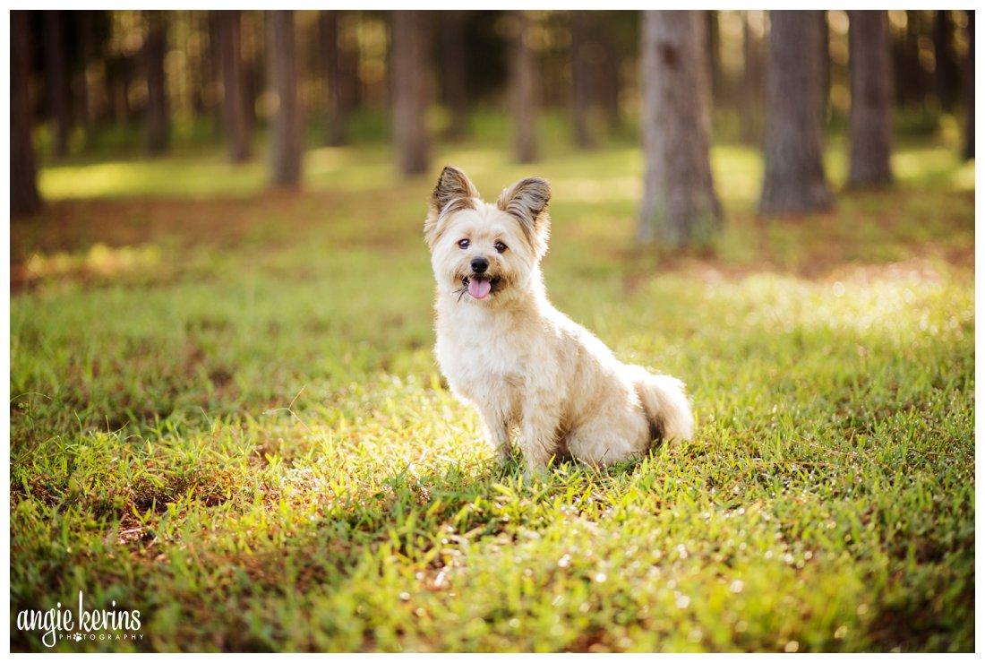 Golden hour sunrise session | Dog photography in Apopka, FL