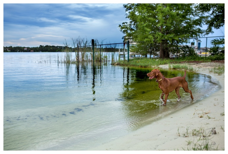 Lake Brantley Dog Photographer