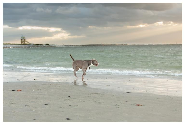 Port Orange Pet Photographer 1